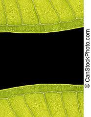 Leaf Frame - leaf frame with space for text on black...