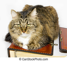Cat and folio