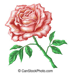 Flower rose, hand-draw painting - Flower rose. Picture,...