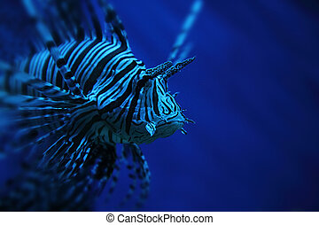 lion fish - striped lion fish from the deep sea