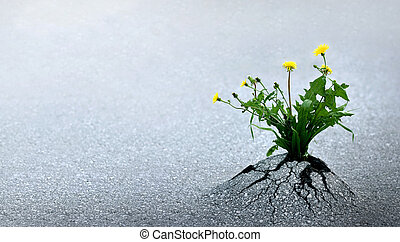 Life Triumphs Against All Odds - Plant emerging through...