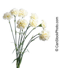 white carnation - bunch of white carnation isolated on white...
