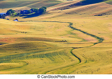 Green Yellow Wheat Grass Fields Farm Road Palouse Washington...