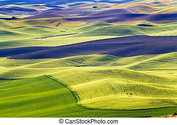 Yellow Green Wheat Fields Black Dirt Fallow Land from...