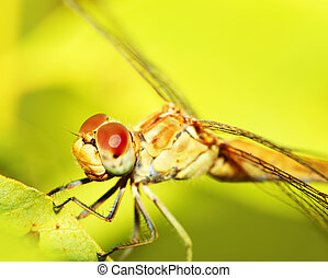 Extreme closeup on dragonfly eyes