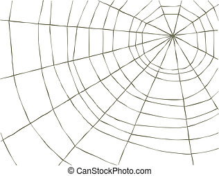 Spider Web on a white background, vector