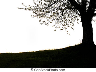 Photo of tree silhouette, countryside