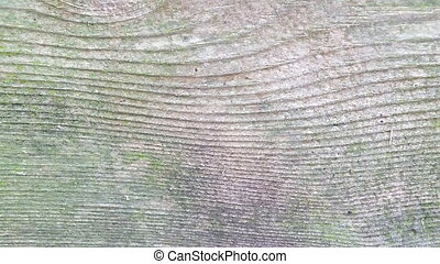 weathered wood turned green