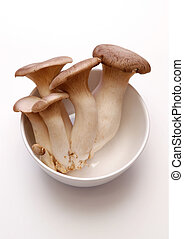 King Oyster mushrooms (King Trumpet / French horn /...