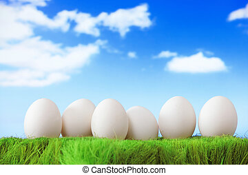 white eggs on green grass with blue sky