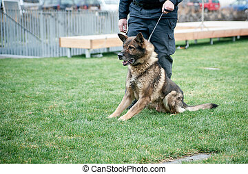 Guard dog on leash with a police officer