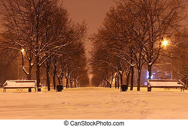 winter night - avenue at winter night