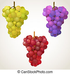 Three cluster of grape - Black, red and green grapes. EPS10...