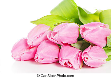 Pink tulips, it is isolated on white