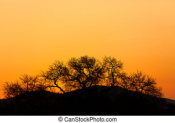 Colorful sunset in Africa - Colorful orange glow at a sunset...