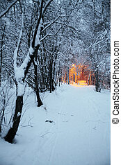Winter park with a path and light from street lanterns in...