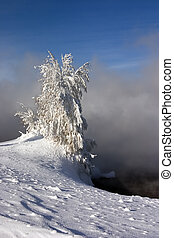 snowed and the frozen lonely tree costing in a snowdrift on a background of a fog and the blue sky