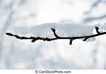 close-up of a branch covered by a snow on blurry background