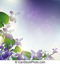 wild violet flowers - wild violet over blue background with...