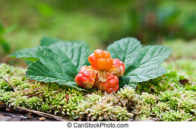 Cloudberry on a green unfocused background. Fresh wild fruit