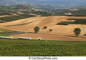 View on vineyards and fields in northern Italy.