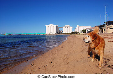 Dog at the beach, Port Lincoln, South Australia