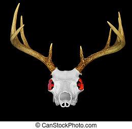 Deer Skull with Glowing Red Eyes - Male deeo skeleton with...