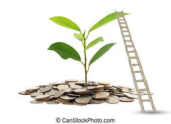 Ladder to money