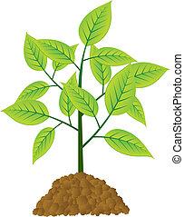 vecteur, jeune, arbre