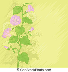 Background with flowers Ipomoea - Yellow background with...