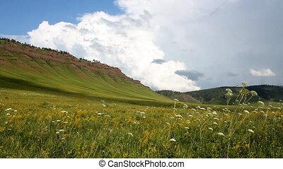 Wild Grass 12