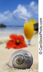 Beautiful sea shell on a tropical island beach with fruit cocktail in background