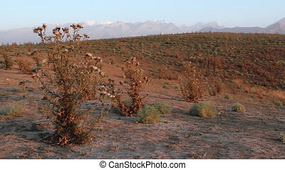 Prickly plant 11 - The Mountain landscape with prickly...