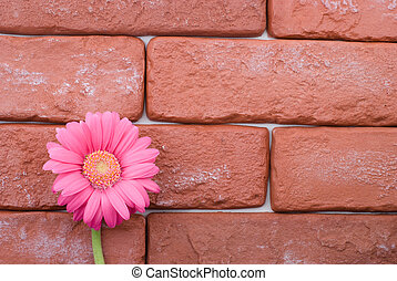 Brick and flower - Gerbera daisy flower bloom in front of...