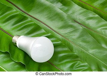LED light bulb on the green fern leaves