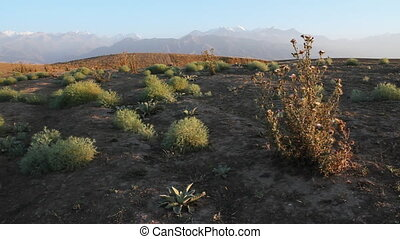 Prickly plant 19 - The Mountain landscape with prickly plant...