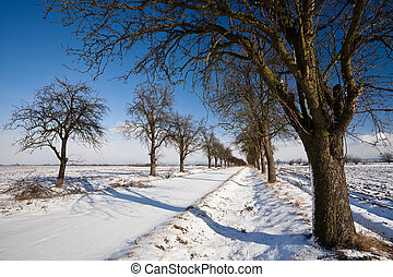 alley covered with fresh snow - Lovely winter landcape -...