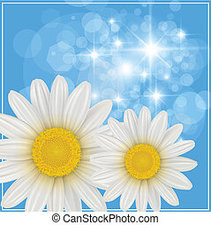 Summer background with white flowers, vector