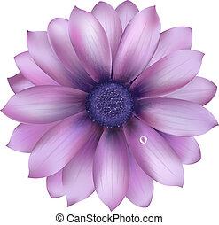 lilás, flor, com, água, gota