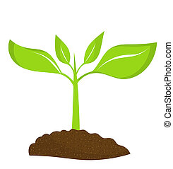 Young plant - Plant seedling growing in soil. Vector...