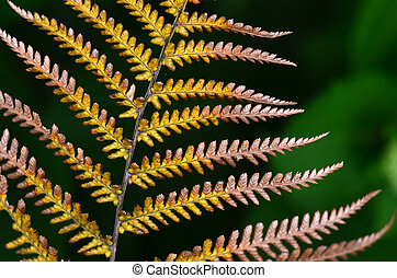 New Zealand Natives Plants and Trees - A close up of a...