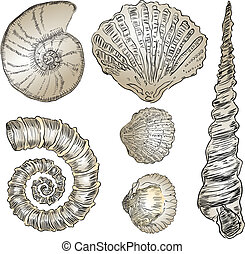 Shells of marine fauna
