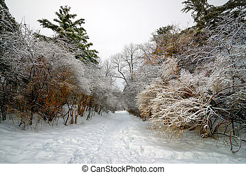 Path Leads Through Frost Laden Trees