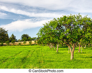 Fruit trees in a summer orchard