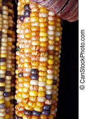 Side by Side Corn - Indian corn side by side