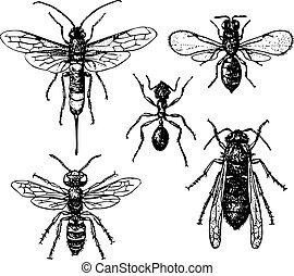 formiga, mosquitos
