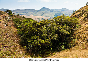Trees in a valley in a mountain landscape