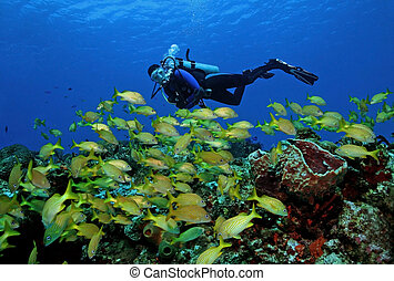 Scuba Diver and School of Fish - Scuba Diver and School of...