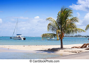 Tropical beach of Mauritius - Coconut palm tree growing at...