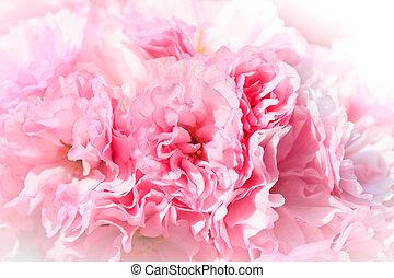 fim,  sakura, cima, florescer